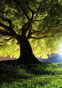 Always Be Your Best… Photography-sunlight-tree-favim-com-433649