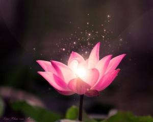 A tsunami of love… Beautiful-flower-nature-favim-com-456475
