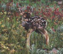 Innocence In Nature… Animal-bambi-beautiful-nature-632536