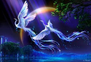 Rising From The Ashes… Art-magic-colours-birds-favim-com-508768