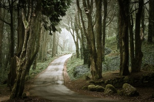 Keep Moving Forward… Dark-fairy-thee-woods-favim-com-178696