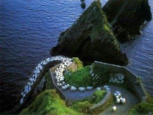 Simon Says…. Ireland-landscape-mountains-nature-sheep-favim-com-240673