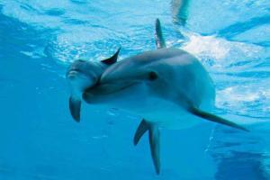 Happy Mother's Day… Animal-animals-beautiful-best-friends-favim-com-641881