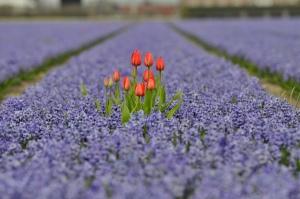 beautiful-beauty-flower-flowers-Favim.com-632709