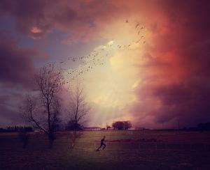 There Is No Running Away… Birds-fantasy-field-photography-purple-favim-com-417302