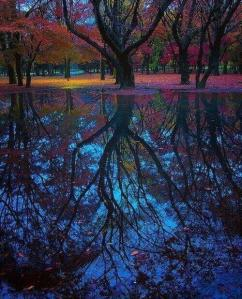 What Our Reflections Shine Back To Us…. Amazing-colors-flowers-forest-favim-com-723100