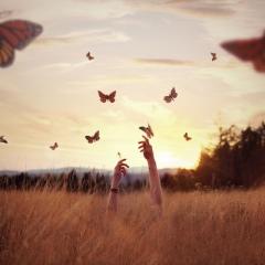 butterflies-field-flowers-freedom-Favim.com-721382