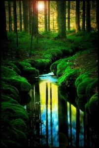 Be Still And Show The Way… Dreamworld-mature-river-forest-sunlight-favim-com-471287