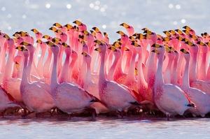 The GRC…....... Animal-animals-autumn-cute-flamingo-favim-com-429538