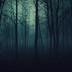 beauty-fog-forest-light-Favim.com-889772