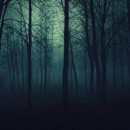 The Fog Is Lifting…. Beauty-fog-forest-light-favim-com-889772