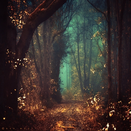 Wondering And Looking For Answers… Amazing-flowers-forest-freedom-favim-com-917533