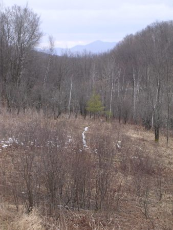 The Deer Trail… 007