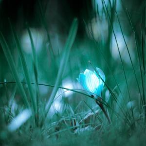 Shifting Seasons And Time….. Favim-com-lightbulb-lightbolp-liteboulp-or-474046