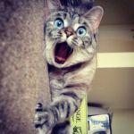 cat-cute-friend-happy-Favim.com-1072492
