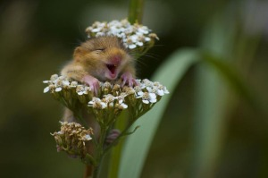Favim.com-adorable-aww-yeah-flowers-field-mouse-flowers-hamster-346965