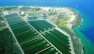 cyantoch_aerial_shot_of_algae_farms_at_keahole-600x351